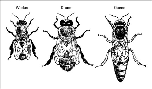3 types of bees